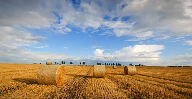 Scotland - Barley Field